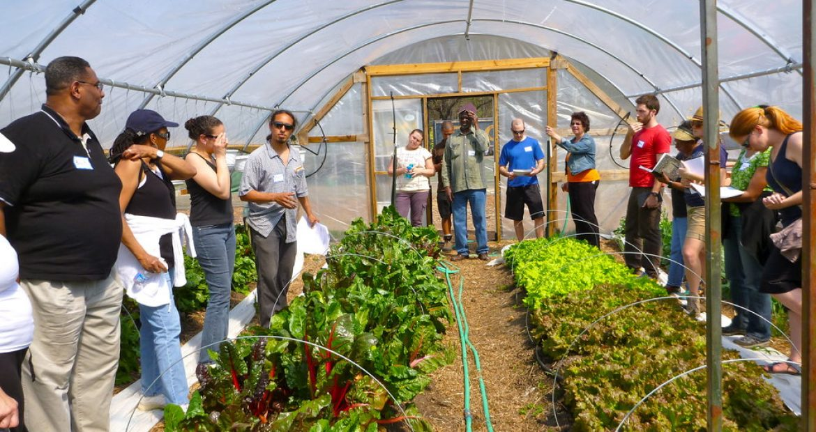 Skills That Can Help You Succeed in Agriculture Industry Career