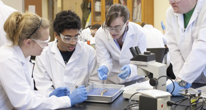 Tips And Tricks To Study Biology